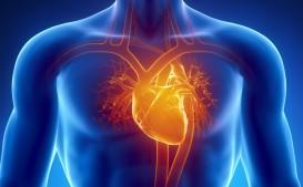 Omeopatia e apparato cardiovascolare